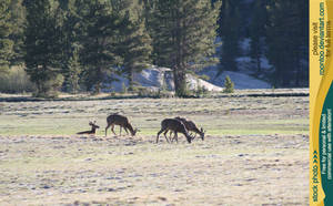 Tuolumne Meadows 8 by RoonToo