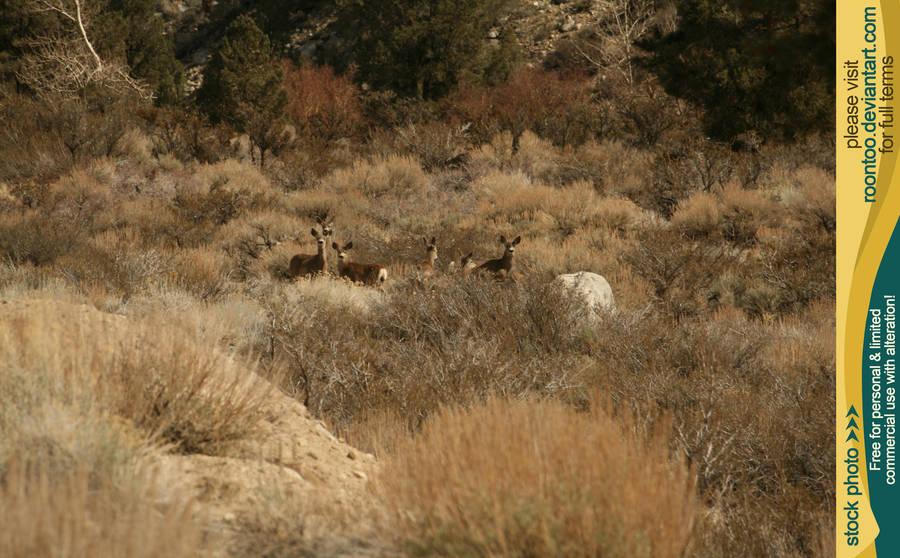 Mule deer herd 3 by RoonToo
