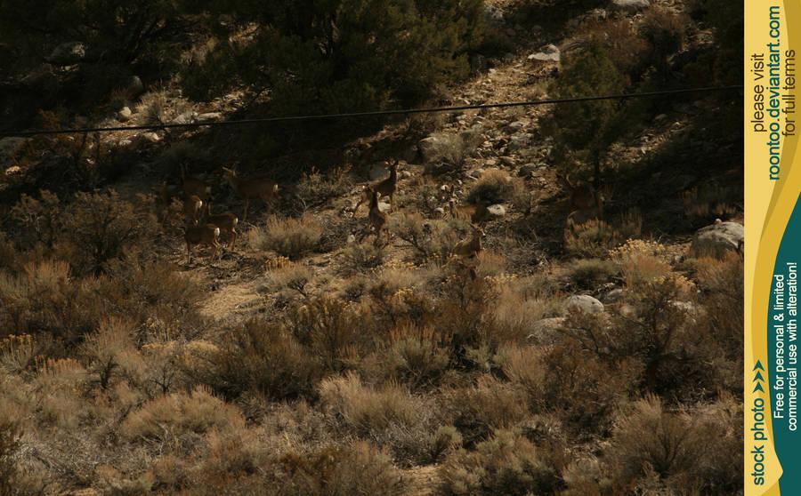 Mule deer herd 8 by RoonToo