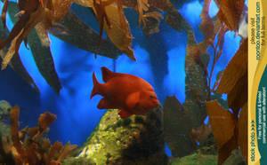 Aquarium 01 by RoonToo