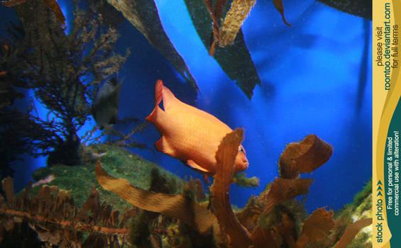 Aquarium 02 by RoonToo