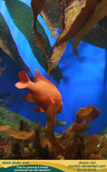 Aquarium 04 by RoonToo