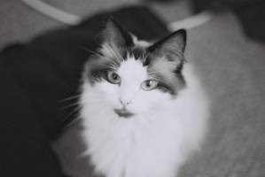 Not Amused by bandit-kitten