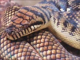 Amethystine Python by TalkStock