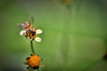 morning honey... by tetestinta