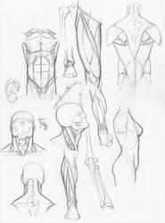 Random anatomy sketches by RV1994