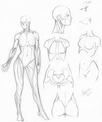 Random anatomy sketches 6 by RV1994