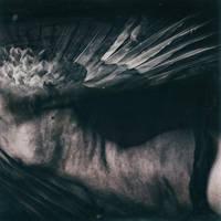 silent bird by MWeiss-Art