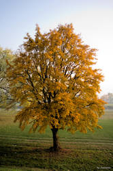 Autumn Tree by Swevener