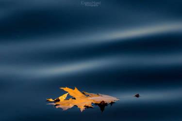 Autumn fire by MarinCristina