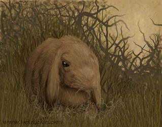 Sage rabbit by toeknuckles