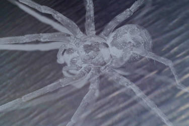 Ghost Spider by NintendOmega