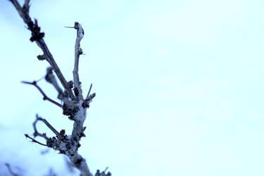 Icy Blue by Jasmine-rin