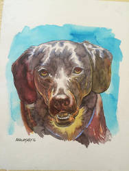 another dog portrait by Walmsley
