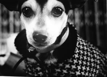 Winter Puppy by kunoichi069