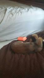 sleepy pupper by irontntyt