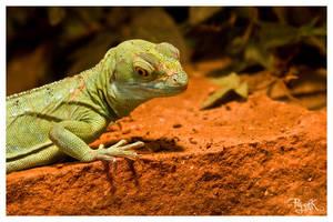 Lizard II by PajonK