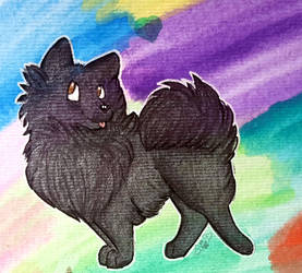 +Rainbow Pom+ by angelwolf