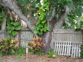 Tree in Fence by JRTribe