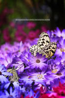Paradise of Butterfly IV by WindyLife