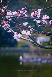 JAPAN VII by WindyLife