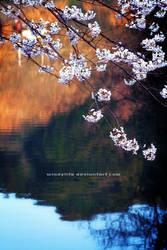 Sakura Pond by WindyLife