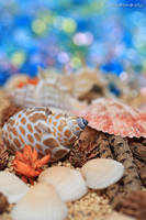 Shell - Summer Memory - II by WindyLife