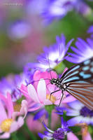 Paradise of Butterfly by WindyLife