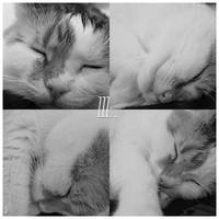 3. Sleep by MattiAusmNorden