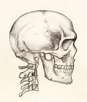Skull by Zorayas