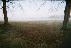 Trees And Field_Foggy by bp-stock