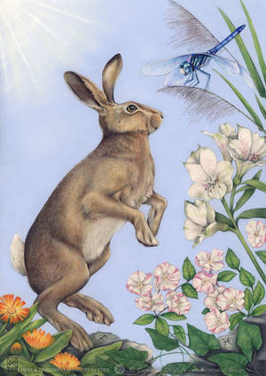 HARE and DRAGONFLY ALLEGORY by STRIX-artist