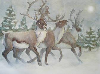 Caribou Run 2008 -Finale- by Wolfyu