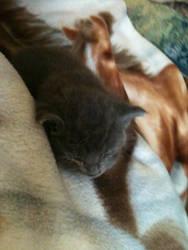 my new kitten selest by silverheart101