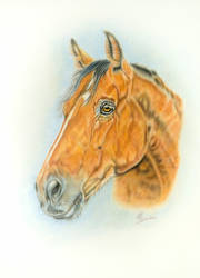 Head horse by EliSovka