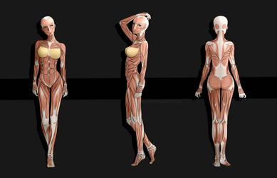 Female Anime Anatomy by sulfr