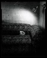still by lauren-rabbit