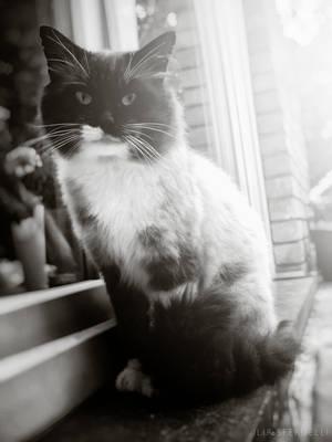 Nicky the cat by kadet13