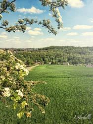 Sun on the Fields by kadet13