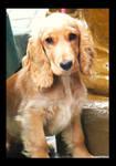 Puppy Dog Eyes by whitewave-moth