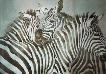Zebra (watercolor) by helenyuqing