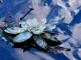 Dirty Flower by cleandirt1111