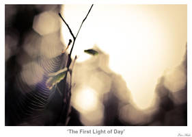 The First Light of Day by MrColon