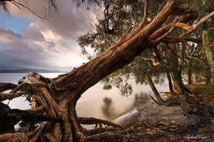 Fallen Tree by robertvine