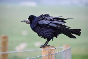 Bird - Maximum Floof by Rad-Puppeteer