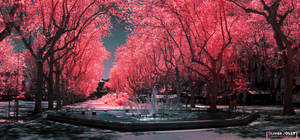 Pink Spring by bamboomix
