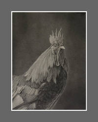 Rooster by graphitemyers