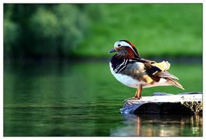 little duck by pixelcatcher