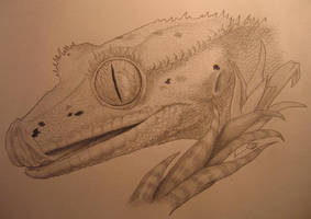 Crested Gecko by amelthia72