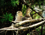 Dove's Family 1 by stefanpriscu